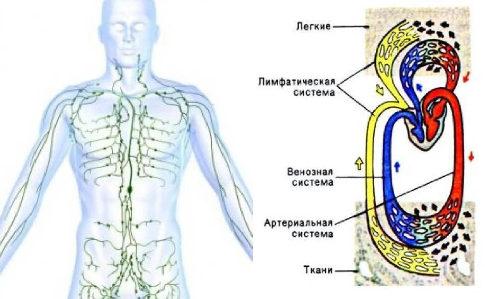 Массаж лимфодренажный противопоказания - Лимфосистема